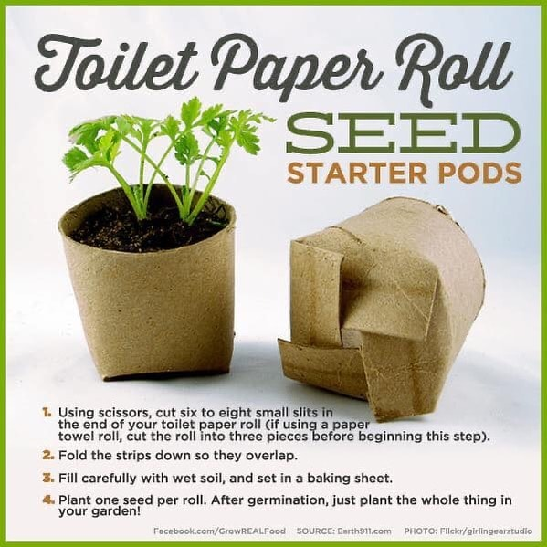 Toilet Paper Roll Crafts Planter